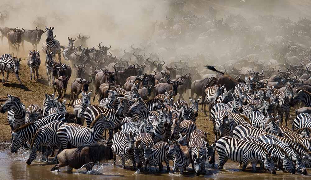 Serengeti Wildebeest Migration