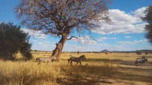 Saadani National Park