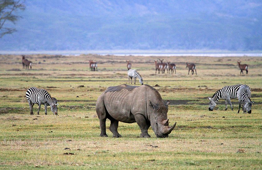 Ngorongoro Caldera